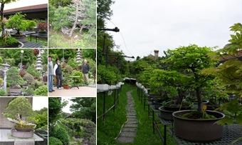 Visualizza corso bonsai