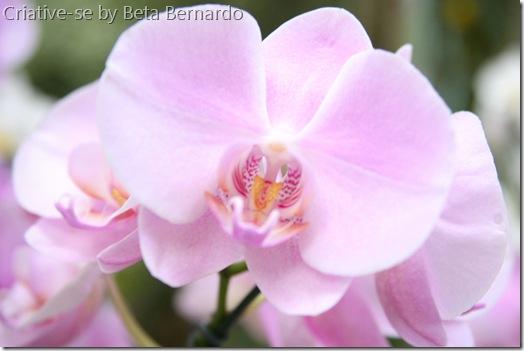 orquidea 1 menor