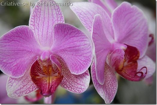 orquidea 4 menor