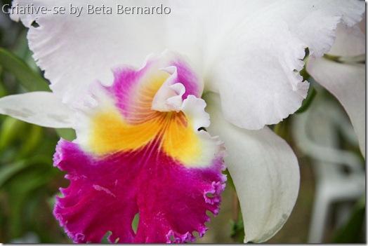 orquidea 3 menor