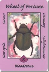 Australian Animal Tarot (10)