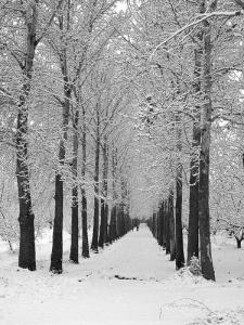 téli sétány fákkal