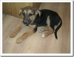 Tasha 3 weeks after being found 002
