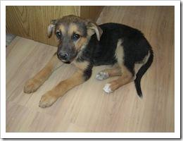 Tasha 3 weeks after being found 002