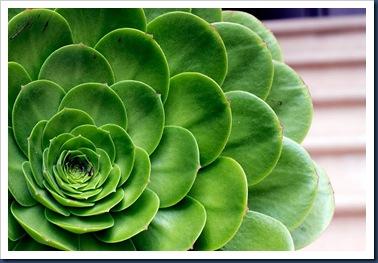 Zahigian-San-Fran-Succulent-web