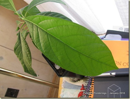 Homeschool, Change, Growth, Move, Three Avacado Tree