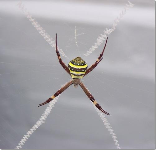 spider 009