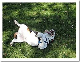 Norton dog park 007