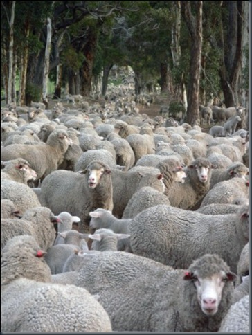 sheep road web compress