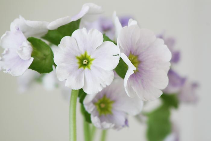blomsterbilde2