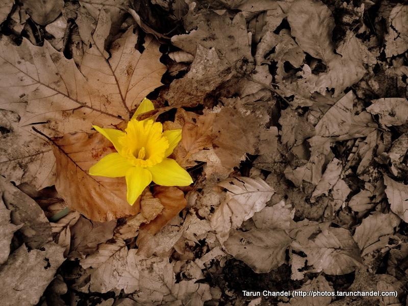 New beginning, Tarun Chandel Photoblog