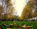 Green Park Dry Leaves, Tarun Chandel Photoblog