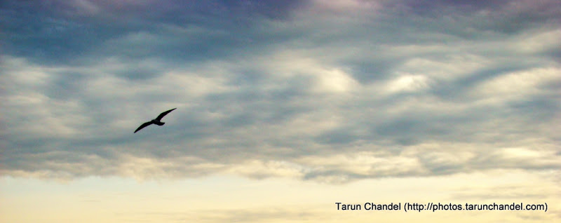 Flight of Freedom, Tarun Chandel Photoblog