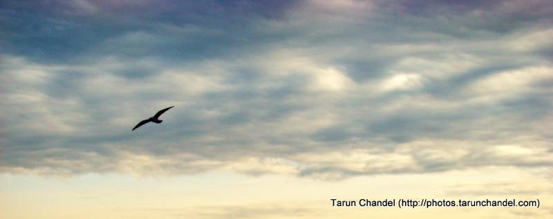 Flight of Freedom, Tarun Chandel Photoblog