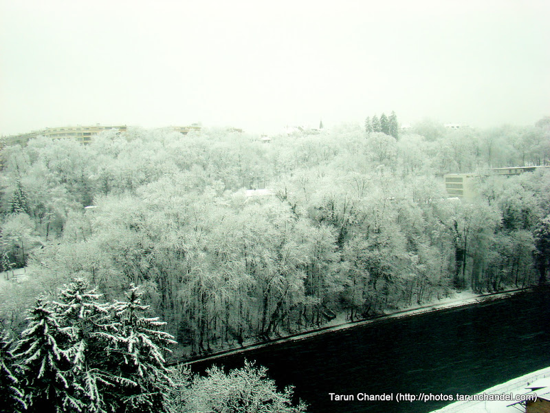 Frozen forest, Tarun Chandel Photoblog