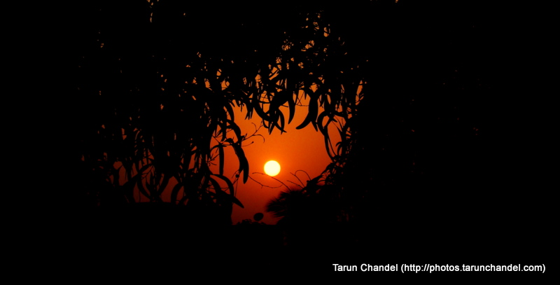 Sun hiding in the Tree Shade, Tarun Chandel Photoblog