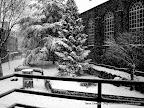 Christmas Snow, Tarun Chandel Photoblog