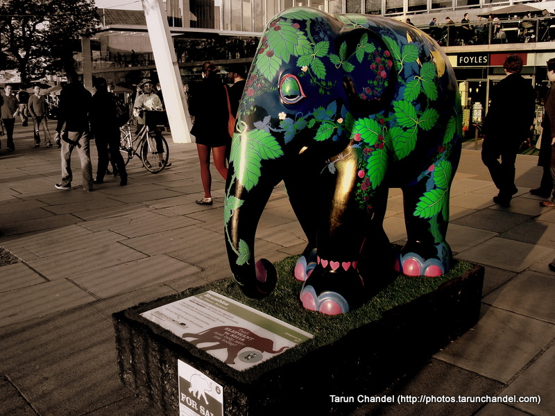 Elephants London UK, Tarun Chandel Photoblog