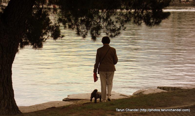 Lake Maggiore Bank Dog Walker at Locarno Switzerland, Tarun Chandel Photoblog