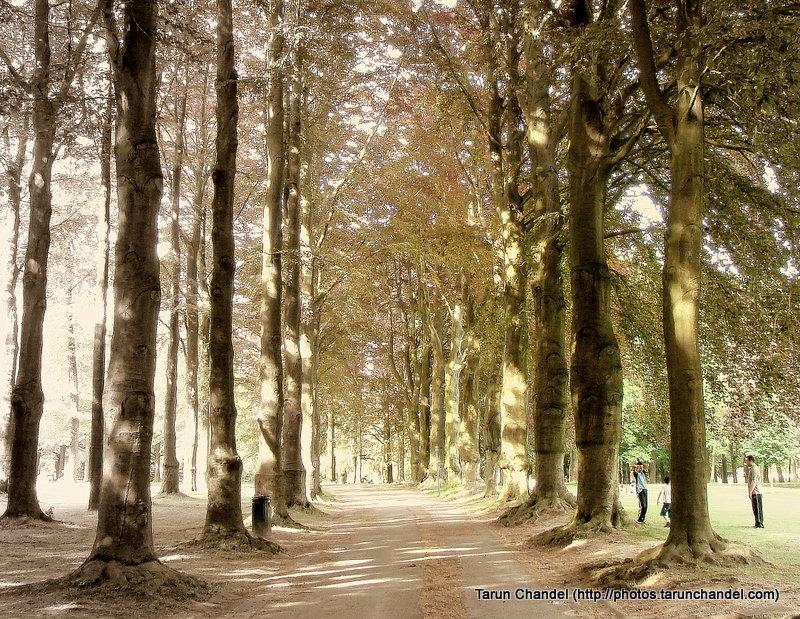 Path, Tarun Chandel Photoblog
