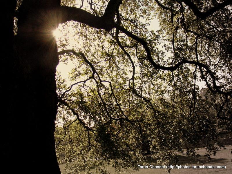 Sunrays, Tarun Chandel Photoblog