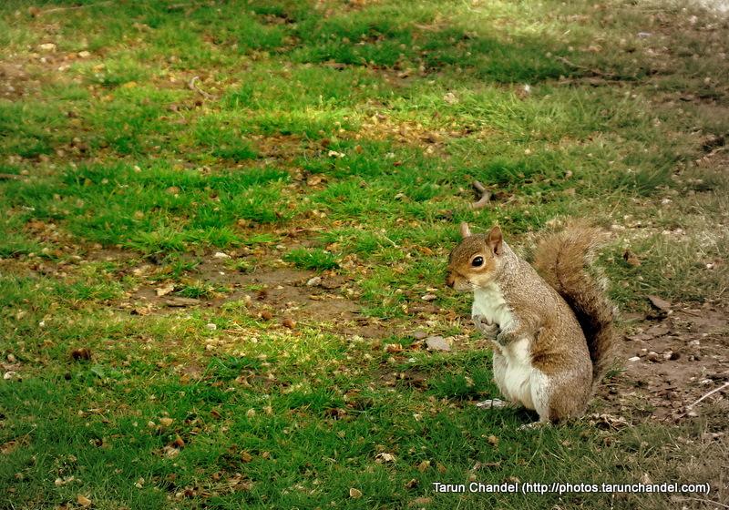 squirrel, Tarun Chandel Photoblog