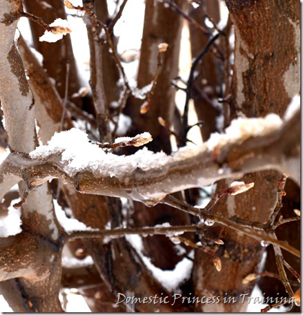 snow, vdaycards, primrose 2.10 078