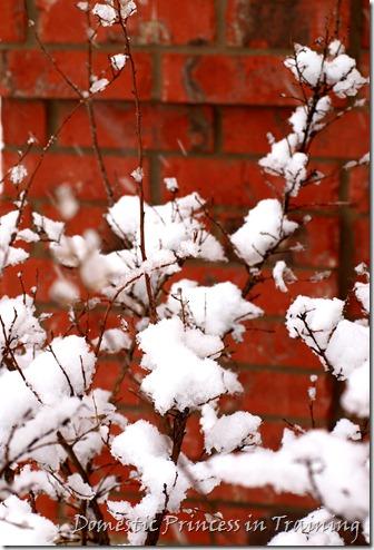 snow, vdaycards, primrose 2.10 092