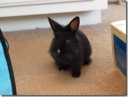 bunnies 4-13-2010 057
