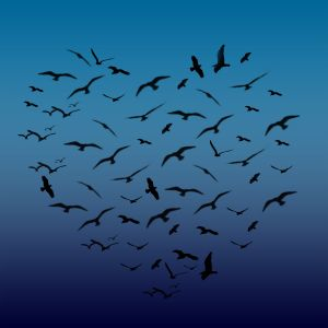 1146008_heart_shaped_birds.SDpKHmcvrJKO.jpg