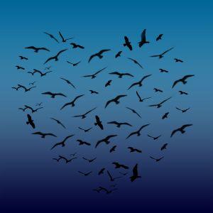 1146008_heart_shaped_birds.SDpKHmcvrJKO.jpg