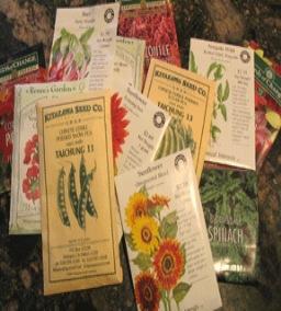 tadepalligudem-seed shops1