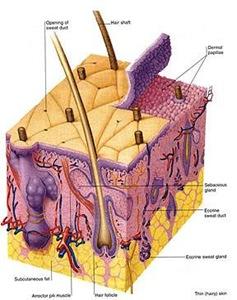 eluru skin doctors