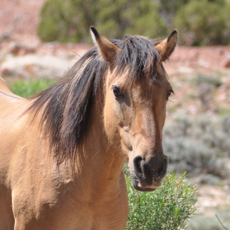 wild horse close-up