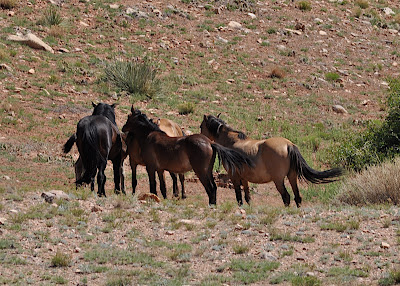 Wild mustang conference
