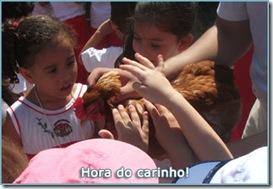 07-carinho-animais-sitio-creche-escola-ladybug-recreio