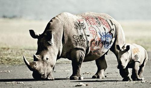 rhino graf