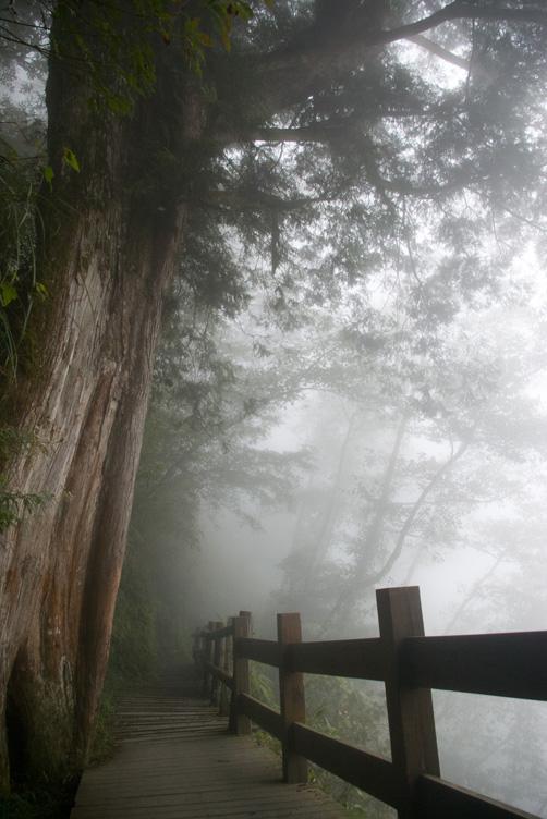 觀霧 II