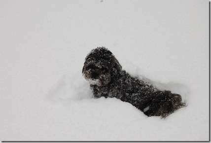 Snow 052