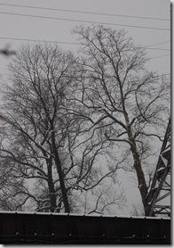 Snow 161