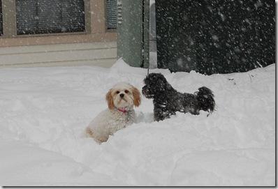 Snow 185