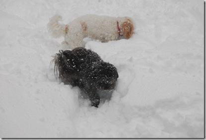 Snow 172