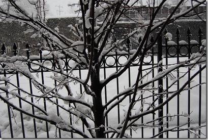 Snow 191