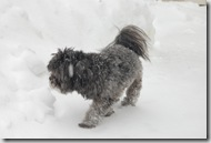 Snow 642