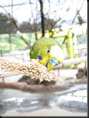 Zoo Aug '10 013