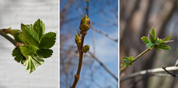 Signs-of-spring-triptych