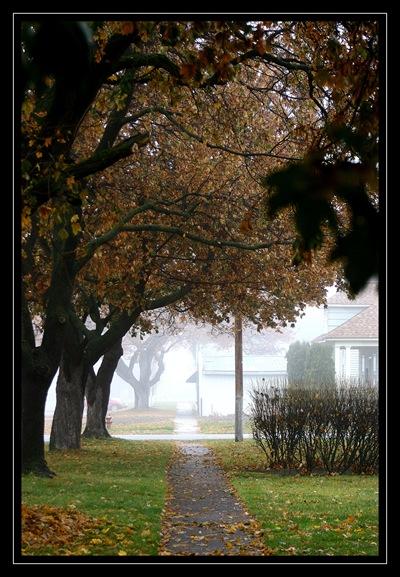 foggy fall