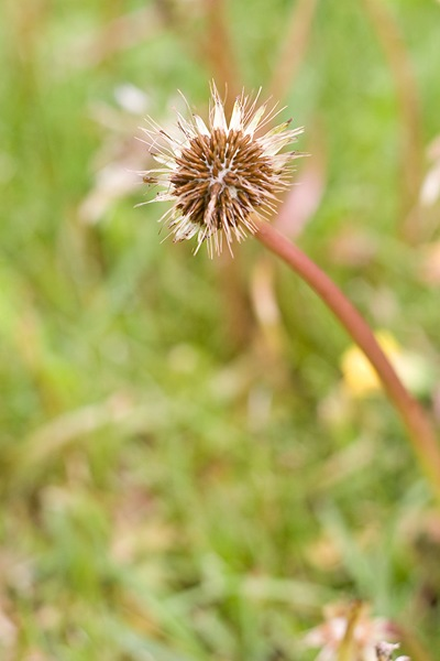 a-different-waterlogged-dandy