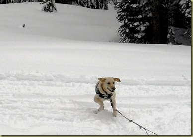 Reyna running like crazy in the snow with a huge smile on her face and her ears flapping.
