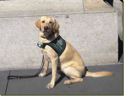 Reyna sitting very tall and proud in front of the Ferry building in SF.